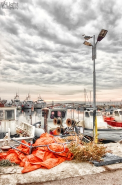 A seagull awaiting the storm | 2011