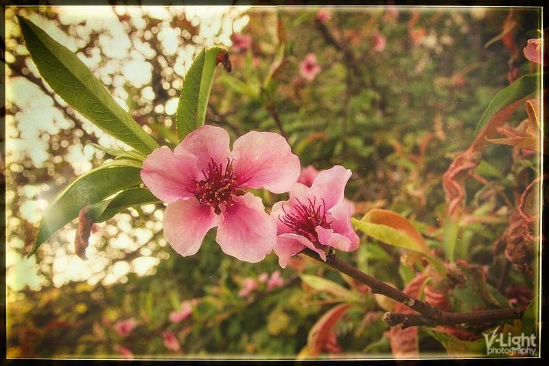 Analog Spring by V-Light